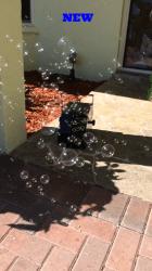 Bubbles(Approx. 60 minutes of bubbles)